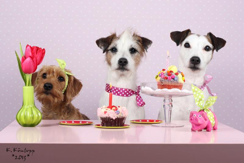 Zum Geburtstag Hund Kein Wünsche Zum Geburtstag